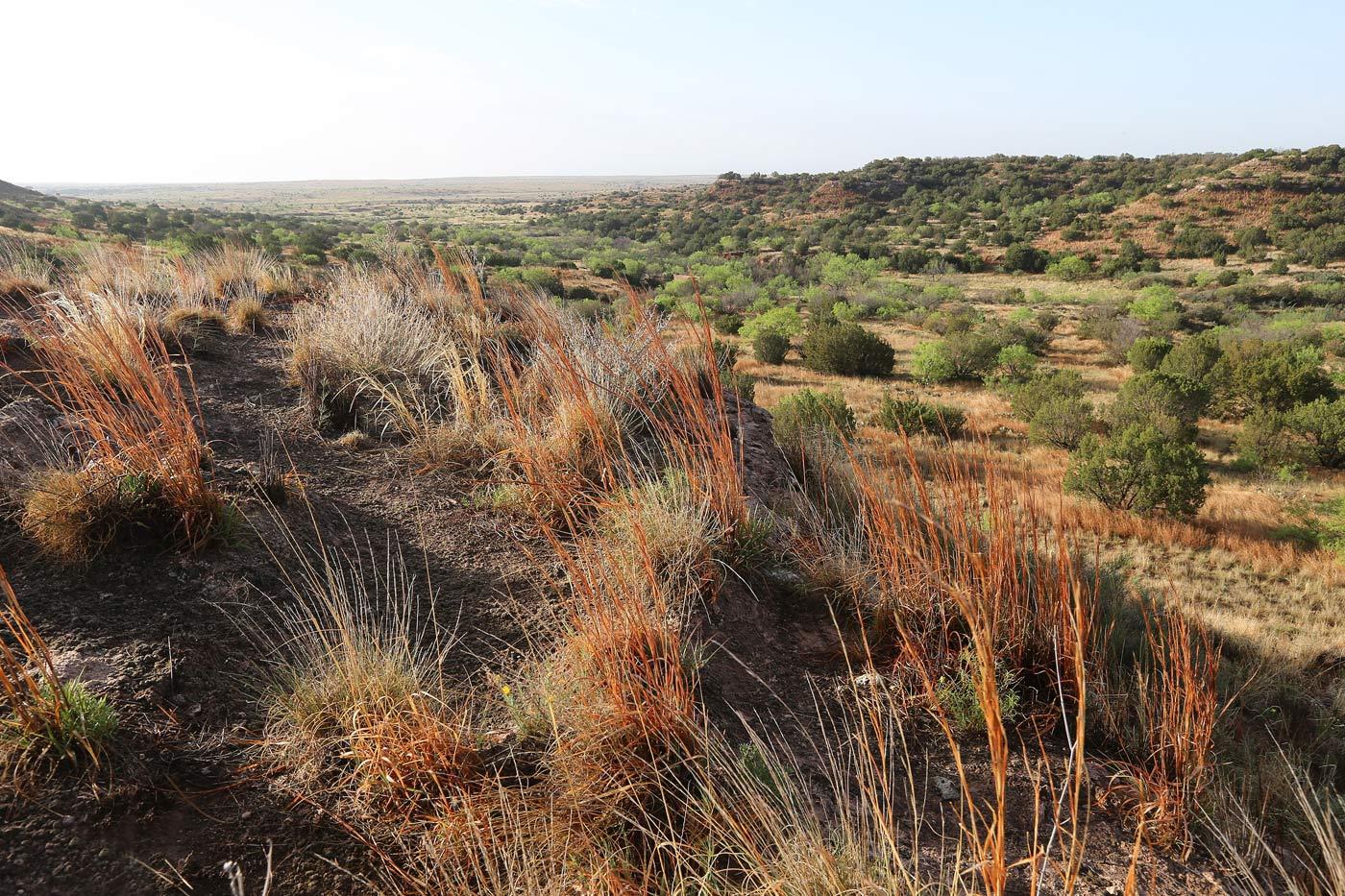 Burnett Oil Land